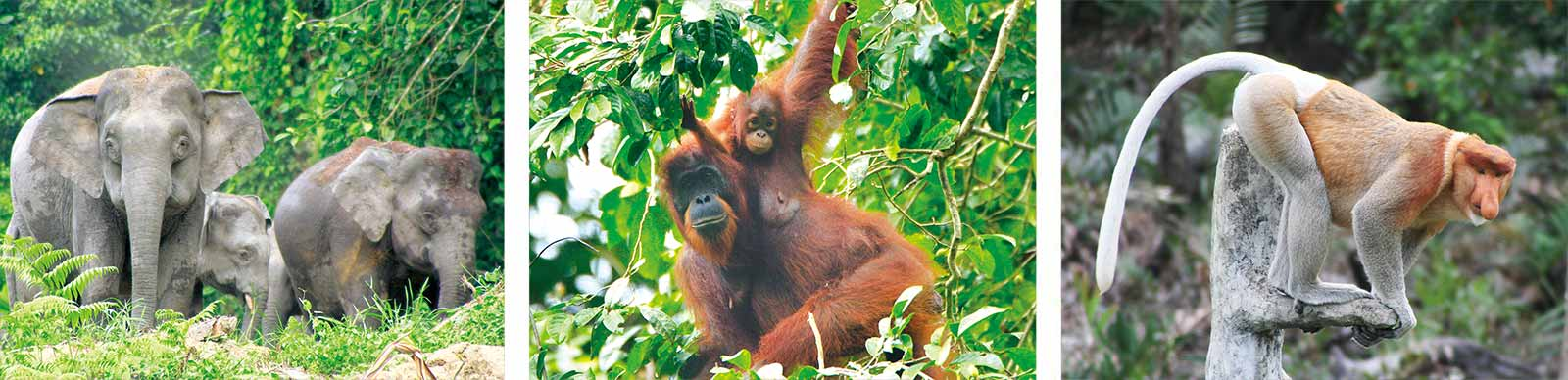 Some examples of the wildlife in Borneo